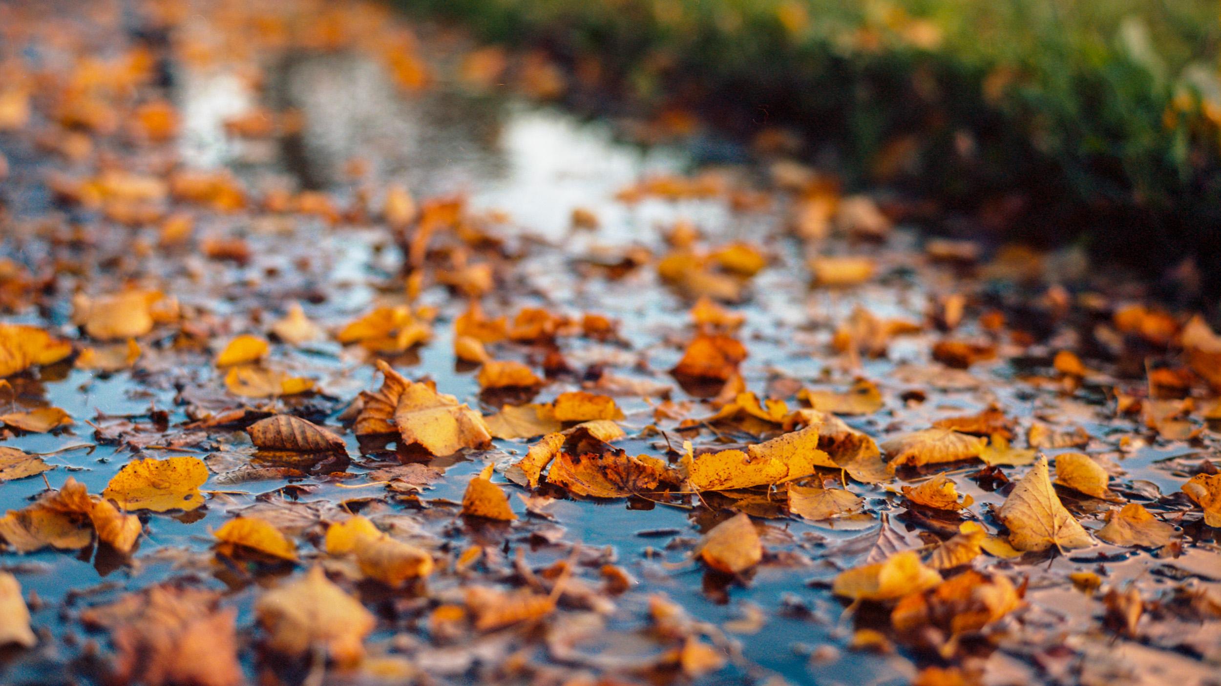Осень в Павловске